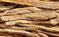 Codonopsis (Dang Shen) 2 oz extract