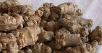 Pseudo Ginseng (Tienchi) Good Grade Small Whole Root 1 lb